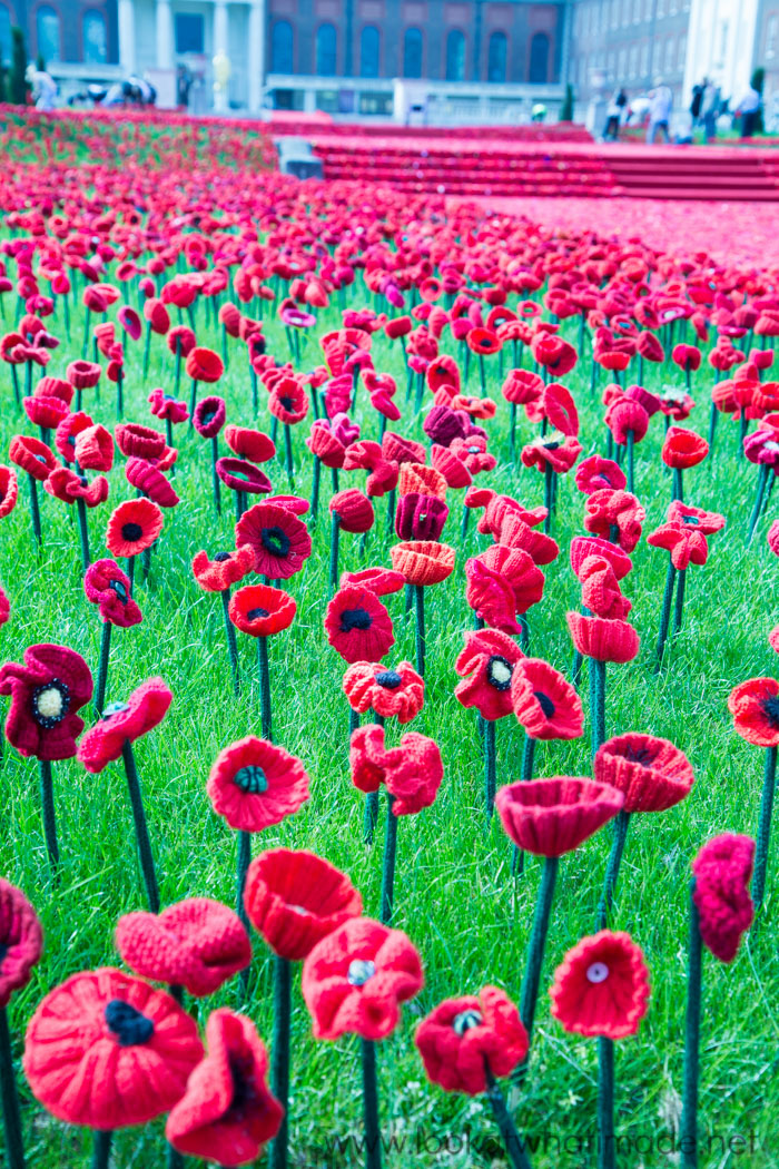 5000 Poppies at the Chelsea Flower Show